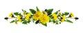 Dandelion and daisy flowers line arrangement Royalty Free Stock Photo