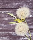 Dandelion delicate on a wooden background flimsy Royalty Free Stock Photo
