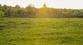 Dandelion field, blue sky and sunlight Royalty Free Stock Photo
