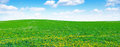 Dandelion field and sky Royalty Free Stock Photo
