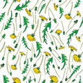 Dandelion flower, bud, leaves hand drawn vector ink color sketch isolated on white, Vector seamless pattern, graphic