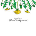 Dandelion flower, bud, leaves hand drawn vector ink colorful sketch isolated on white background, Decorative graphic