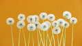 Dandelion flower on yellow color background, group objects on blank space backdrop, nature and spring season concept.