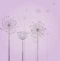 Dandelion flowers decoration with vector Royalty Free Stock Image