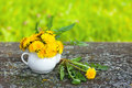 Dandelion flowers in small teapot Royalty Free Stock Photo