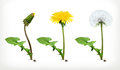 Dandelion flowers, vector icon set Royalty Free Stock Photo