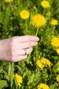 Dandelion hand woman Στοκ Εικόνες