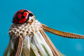 Dandelion head with a lady bug on top and blue Royalty Free Stock Photo