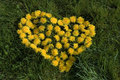 Dandelion heart natural love background from Royalty Free Stock Photos