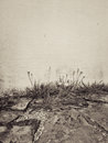 Dandelion on the house wall sepia image Royalty Free Stock Photo