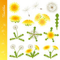 Dandelion icons set Stock Photography