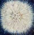 Dandelion Painting Stock Photos
