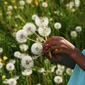 Dandelion seeds flower Royalty Free Stock Photo