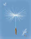 Dandelion seeds vector icon
