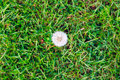 Dandelion Top View Royalty Free Stock Photo