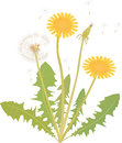 Dandelion vector illustration of a blowing Stock Images