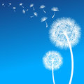 Dandelion vector on a wind loses the integrity Stock Images
