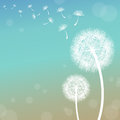 Dandelion vector on a wind loses the integrity Stock Photos