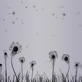 Dandelion wind in grass Royalty Free Stock Photo