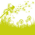 Dandelion in the wind green Stock Image