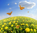 Dandelions with butterfly in the meadow Royalty Free Stock Photos