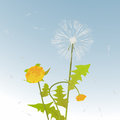 Dandelions decorative card Royalty Free Stock Photo