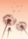 Dandelions in sepia with flying seeds vector Stock Photo