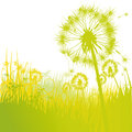 Dandelions and wind in the green grass Royalty Free Stock Images
