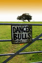 Danger Bulls Stock Images