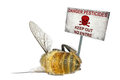 Danger pesticides dead honey bee and the warning poster isolated on the white background Royalty Free Stock Photography