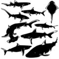 Dangerous sharks vector silhouettes Royalty Free Stock Image