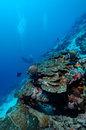 Dangerously beautiful aceh indonesia scuba diving Royalty Free Stock Photo