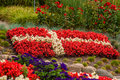 Danish flag made out of flowers Royalty Free Stock Photo