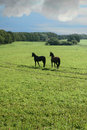 Danish horses Royalty Free Stock Photo
