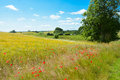 Danish summer landscape Royalty Free Stock Photo