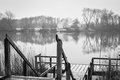 Danish winter lake a calm on a gray day a small bathing bridge in the front Royalty Free Stock Image