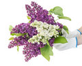 Dans des mains du fermier le grand bouquet lilas Photo libre de droits