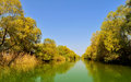 Danube delta landscape with trees reflection Stock Images