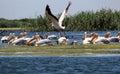 Danube Delta, Romania Royalty Free Stock Photo