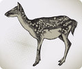 Dappled deer, hand-drawing. Vector illustration