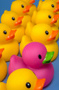 Dare to be different - rubber ducks on blue Stock Images