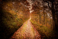 Dark autumn forest pathway a Stock Image