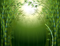 A dark bamboo forest illustration of Royalty Free Stock Photography
