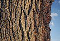 Dark bark on tree Royalty Free Stock Image