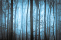 Dark blue spooky forrest with trees Royalty Free Stock Photo