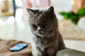 Dark cat persian looking in feeling ruffian Royalty Free Stock Photography