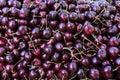 Dark cherries pattern. Fruits background Royalty Free Stock Photo