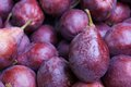Dark crimson anjou pears close up of a pile of at the farmers market Royalty Free Stock Images