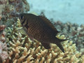 Dark damsel in red sea Royalty Free Stock Photography