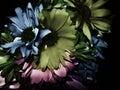Dark Flower Background Royalty Free Stock Photo